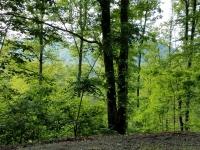 Mountain Meadows lush summer foliage