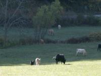 neighbor-muse-and-pastoral-views