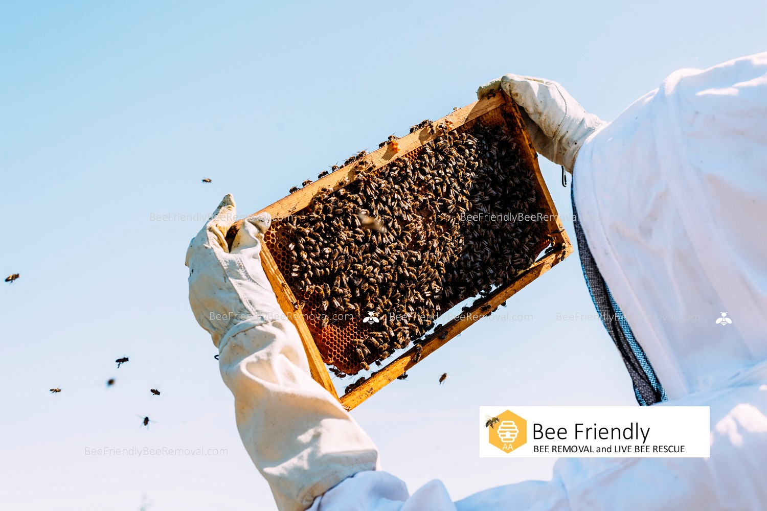 Bee Friendly Bee Removal