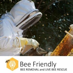 beefriendly beekeeper