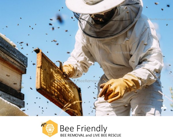 Bee Friendly Beekeeper and Bee Removal