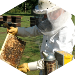 BeeFriendly Bee Removal