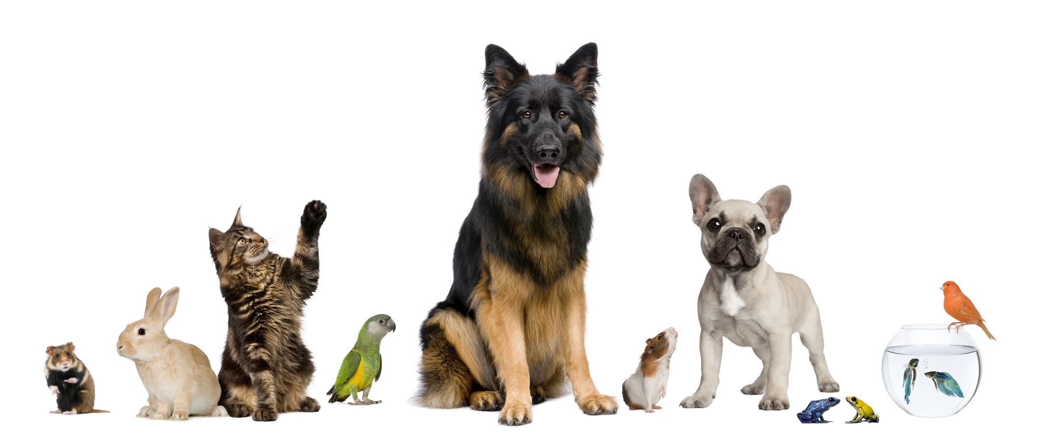 Compounding for Pets