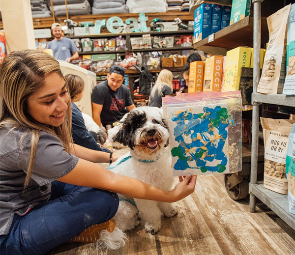Painting with a WAG at Lucky Dog Barkery