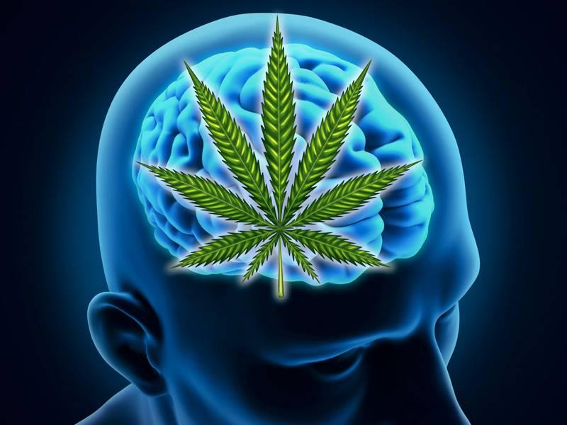 Cannibas on the Brain