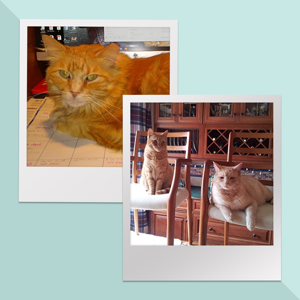 Meet Goose, Maverick, and Cougar. They certainly run a tight ship, for owners Jeff and Dagmar T. in Dayton, OH!