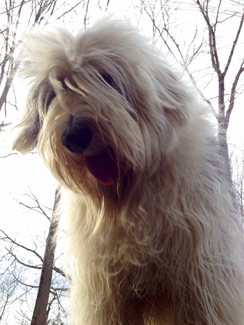 Meet Baxter. Baxter is John C.'s Old English Sheepdog and he's six. He weighs 100 pounds but looks bigger. He loves riding in the truck. He also loves people, other animals and, especially, baths.
