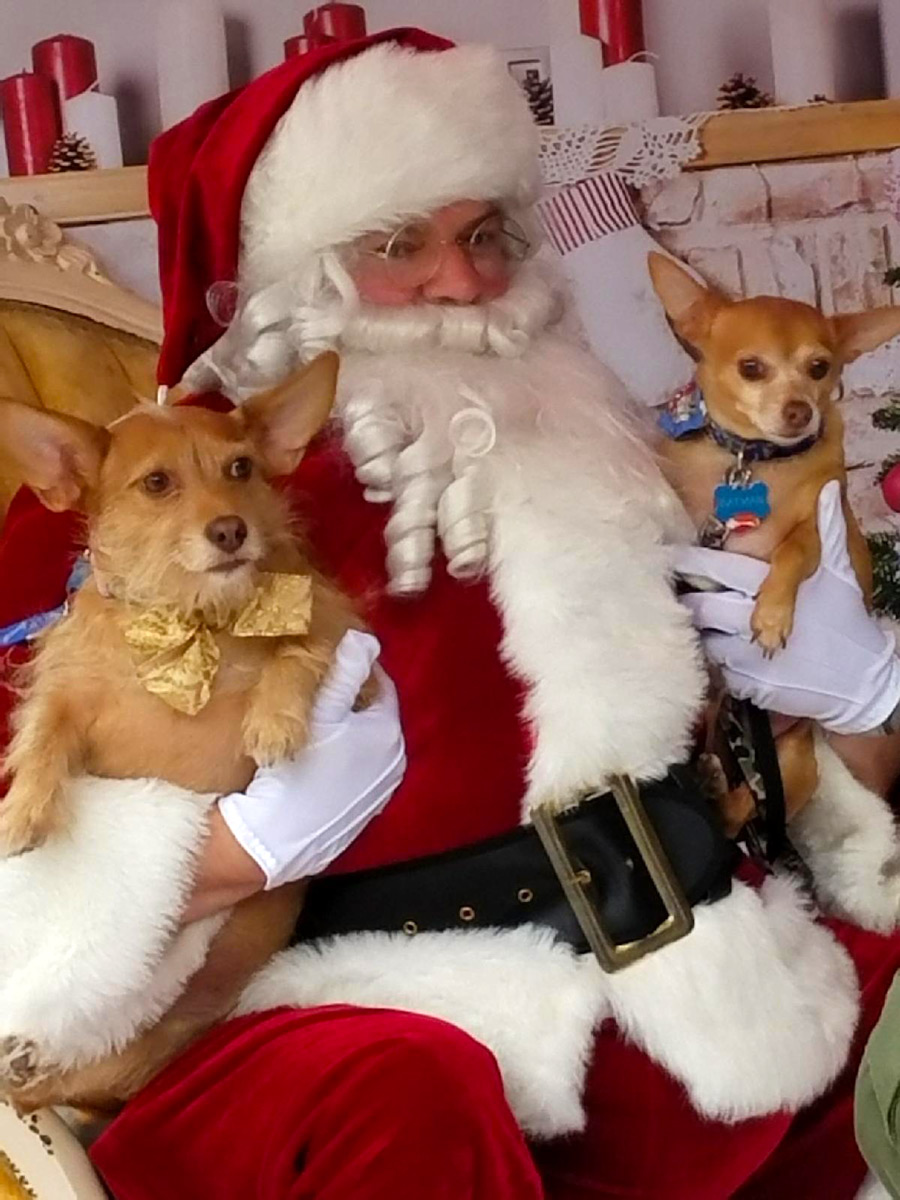 Meet Mike H.'s Batman and Robin, who were ready for Christmas, on Santa's lap. They are both Chihuahua mixes, and both loved 100%. Surely Santa brought them everything they asked for!