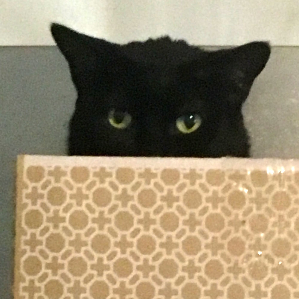 Here's Buddy, hiding in his favorite box on top of the refrigerator. Sandy D. sent in his picture.