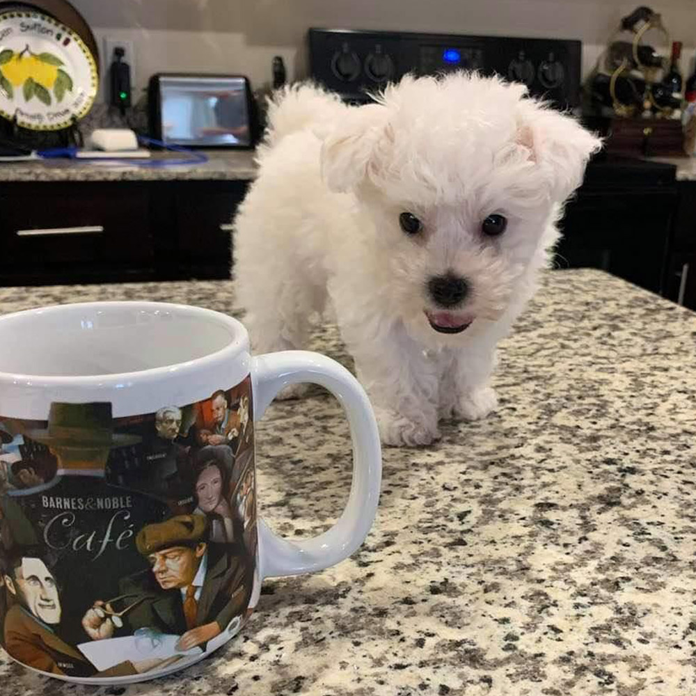 Dan and Sherrie in San Antonio were feeling a bit lonely, so what did they do? They picked up a furry, funny, and friendly friend.