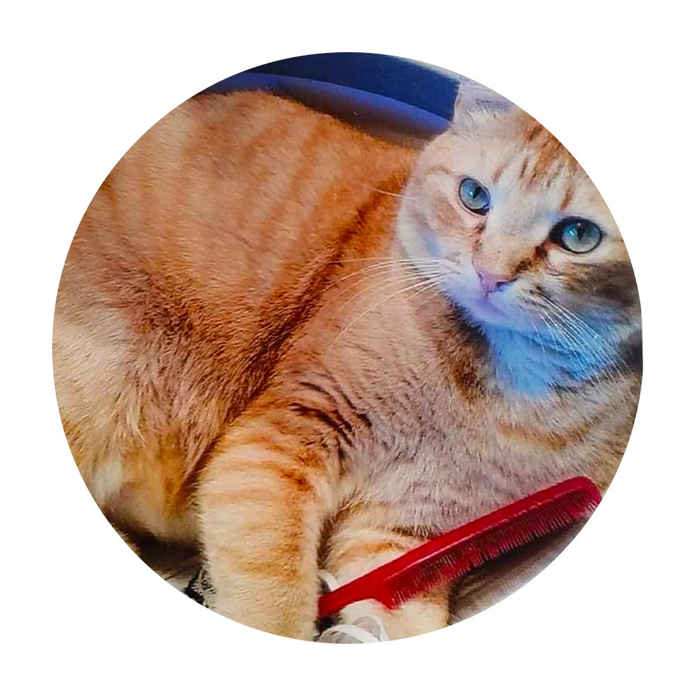 Meet Lucky. Frances R. in Mt. Angel, OR took in Lucky as a kitten, as says he is a great mouser. He's also quite at home in her bathroom sink, as his picture indicates!
