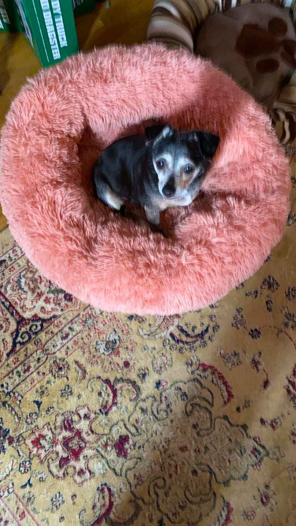 Meet Bruce M. of Wallingford, CT's frosty-faced, 15-year-old diva dog, Maddie.