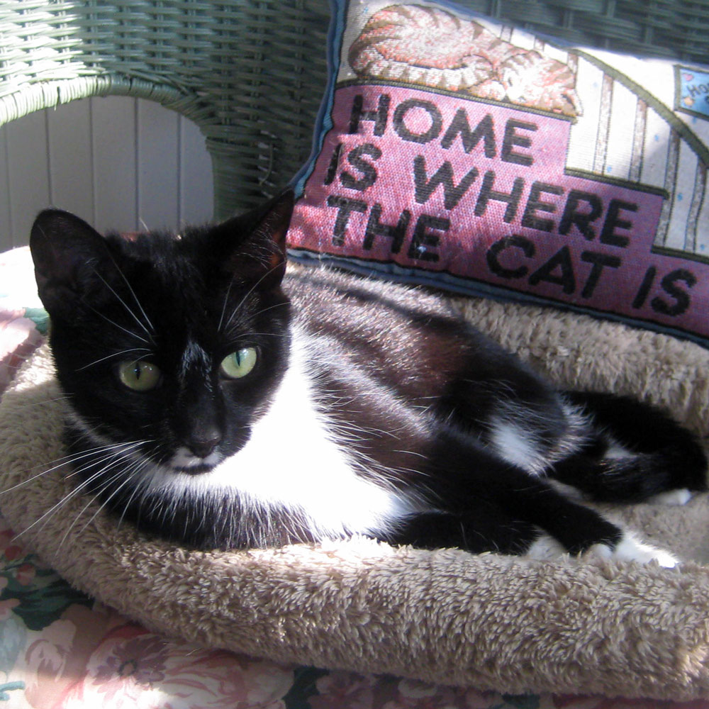Dear Heloise: I adopted Chloe Z from Catkins Animal Rescue in Park Falls, Wisconsin, on March 25 and drove 2-1/2 hours to get her.