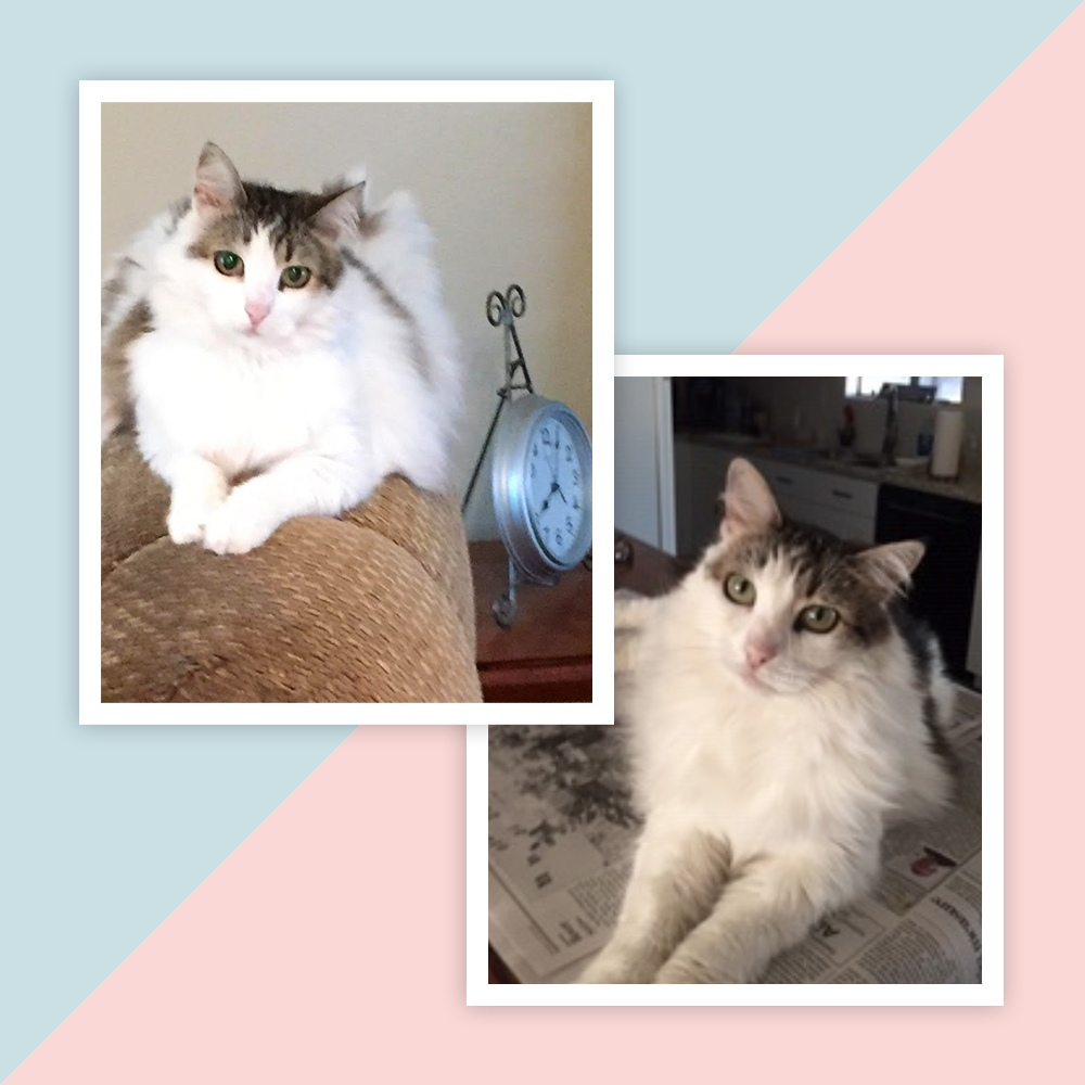 Meet Tiger. John M. sent two pics of this white and tortie-colored cat. So sweet, with big eyes. Tiger's sitting by a clock reminding us, the time we have with our pets is shorter than we would like.