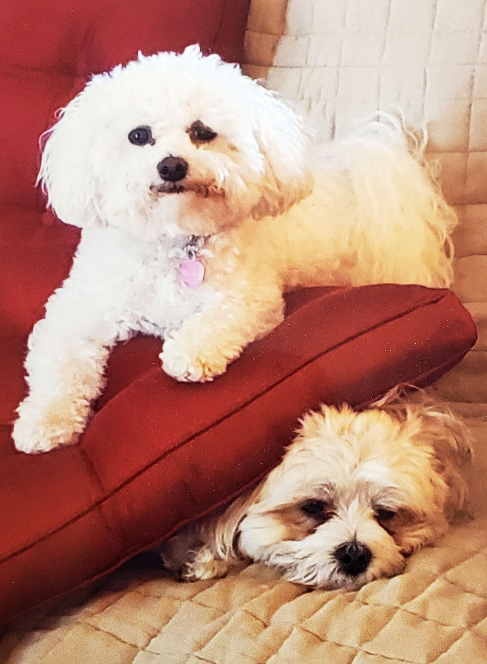Meet Lexi and Dolli. Owner Sandee says they are such good buddies!