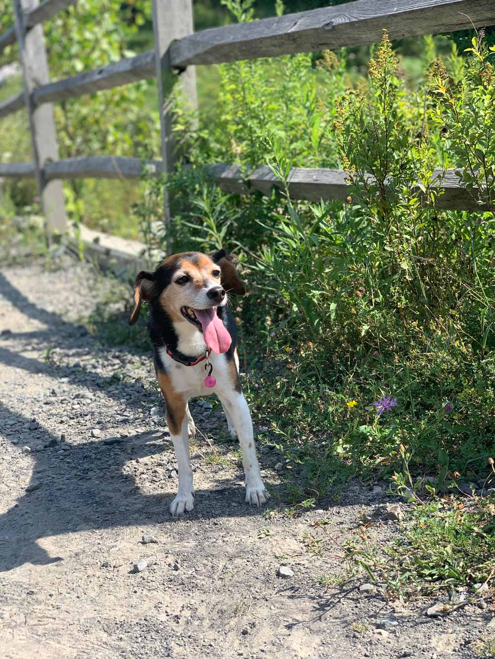 """Dear Heloise: This is my dog Ollie, a happy and spry pup who turns 11 next month! She also goes by """"Smalldog."""" I got her in December 2010."""