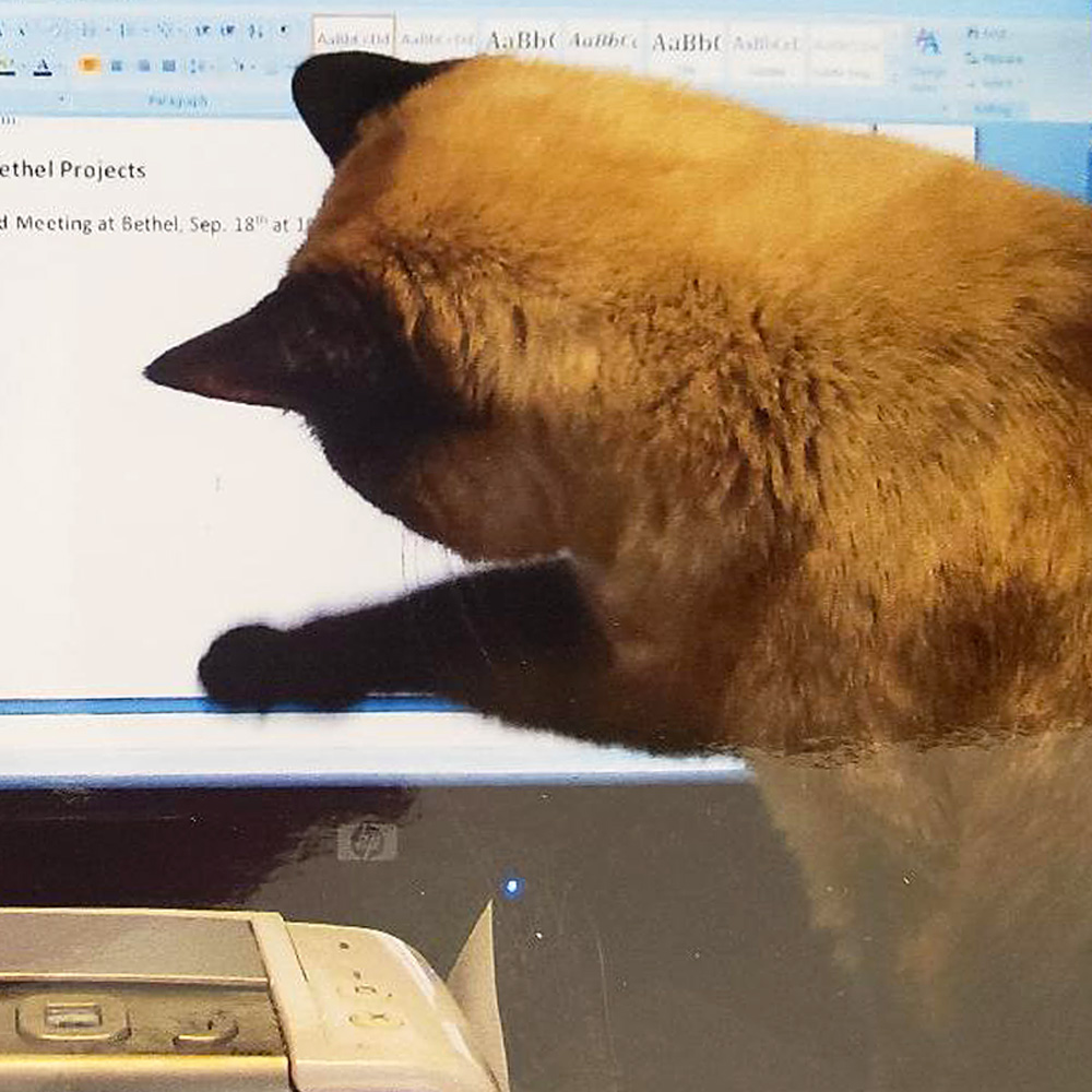 For this week's Pet Pal, we are revisiting Ke-Ke, Leo and LeEtta's precocious Siamese cat, in Culbertson, MT. Leo was working at home, as many of us are nowadays, and Ke-Ke just had to jump up on the desk and chase the cursor on the screen – such a silly girl!