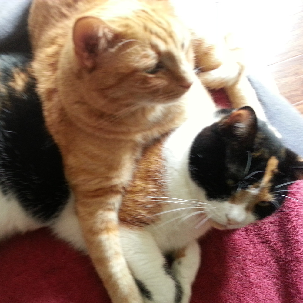 Gary P. in Laguna Hills, CA sent a picture of his cats Max and Coco, relaxing, on top of each other?