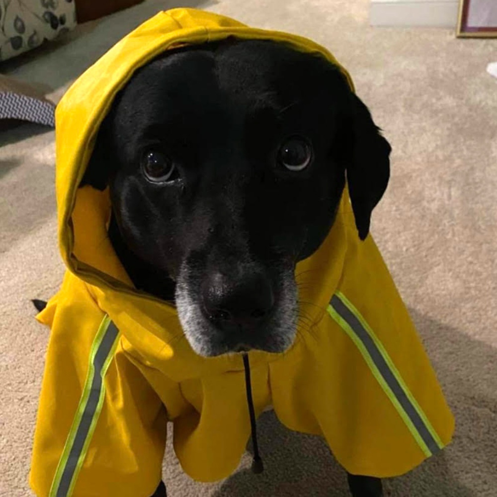 Meet Gracie, adopted from Georgia, ready to brave the New England weather, sporting an adorable raincoat.