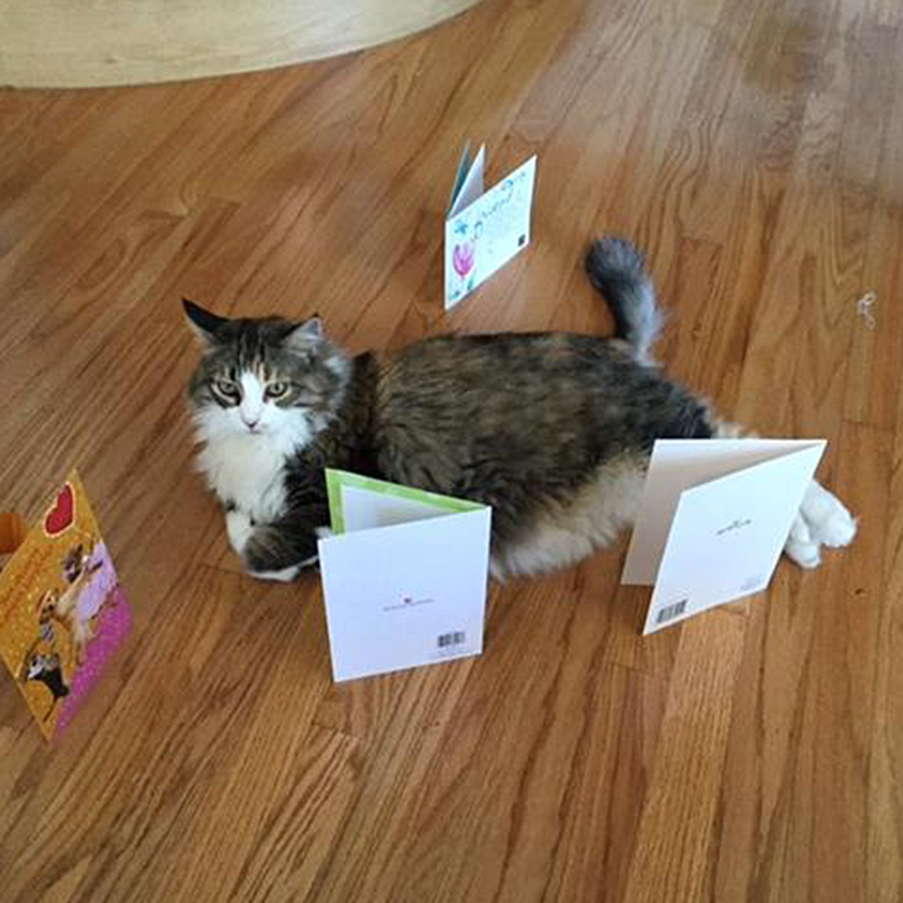 Marlene D. sent a picture of her precious rescued cat, Angel.