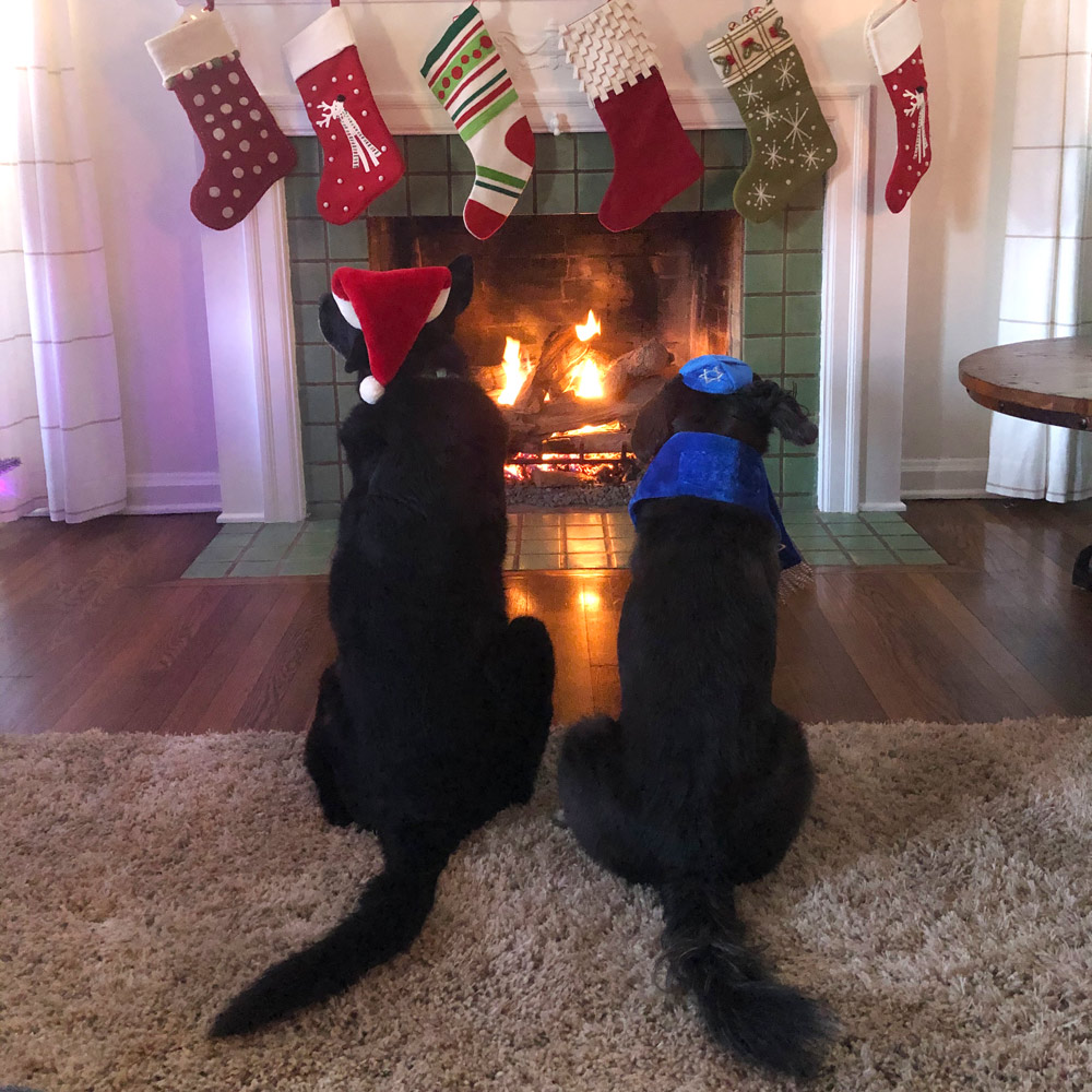 """Our dogs Molly (lab mix) and Jon Stewart (terrier mix) are putting 2020 """"behind"""" them."""