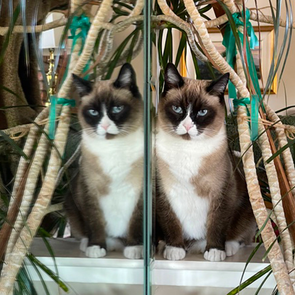 My cat, Abby was leaning against the mirror when I looked up and caught this image that looked like two of her! I just happened to have my phone handy to snap this picture.