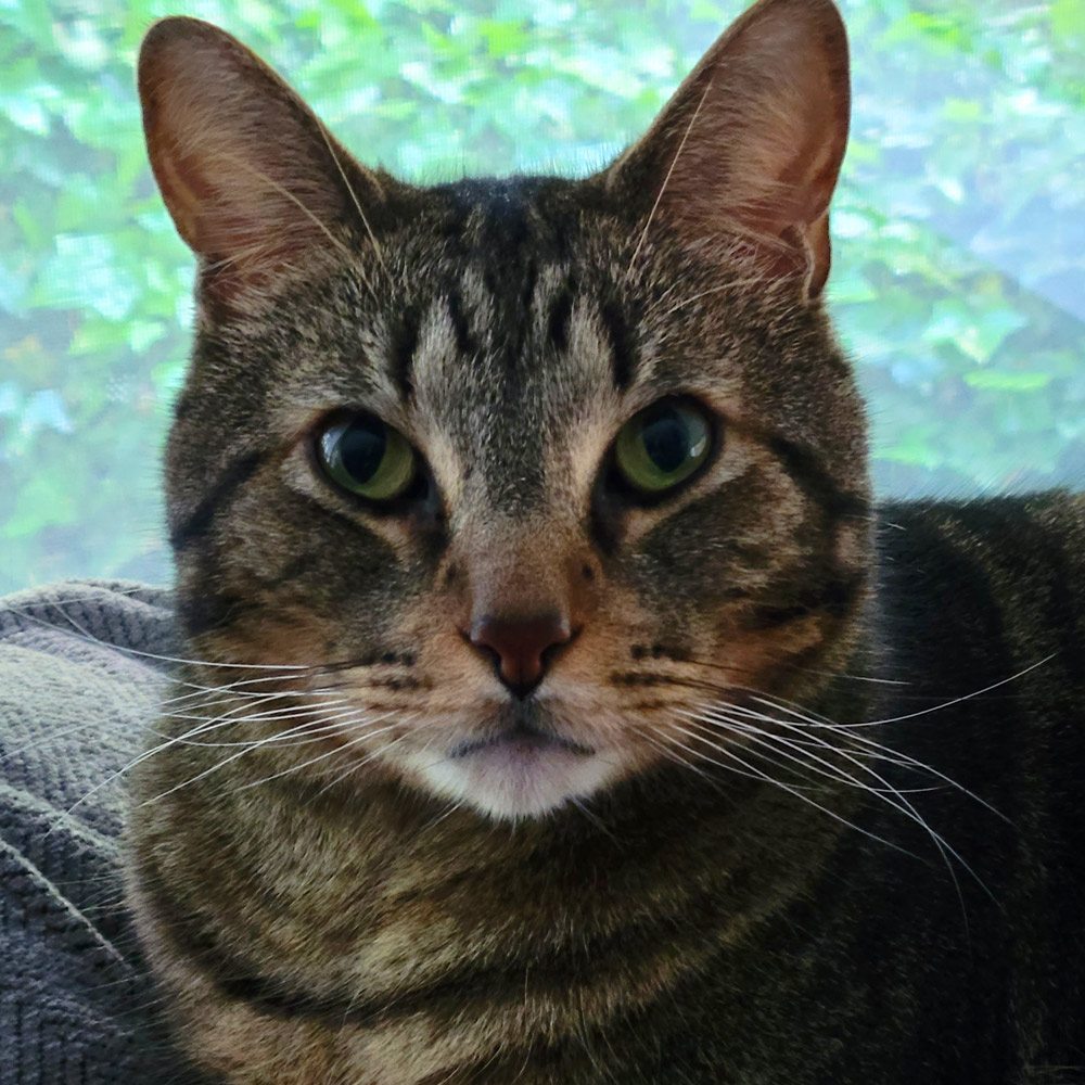 """Here is our kitty, Willoughby. We found him five years ago in an RV park. He had been left behind by a family on vacation. He's the sweetest boy who is so endearing; in fact, his nickname is """"Mr. Love""""!"""
