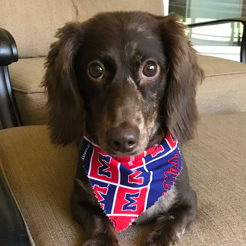 This is our pride and joy, Benny. He is a 2-year-old miniature long-haired dachshund. His favorite hobbies are riding on the golf cart and chasing squirrels up trees.
