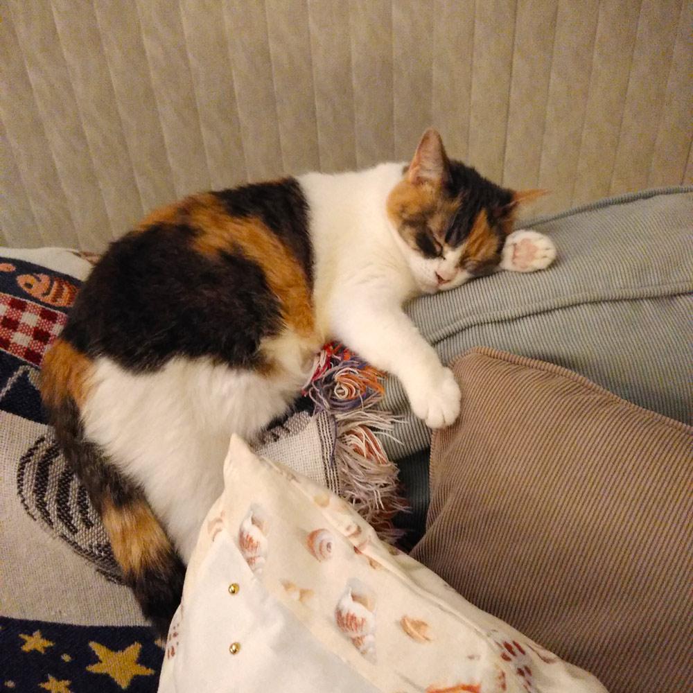 Tia taking a nap on the sofa