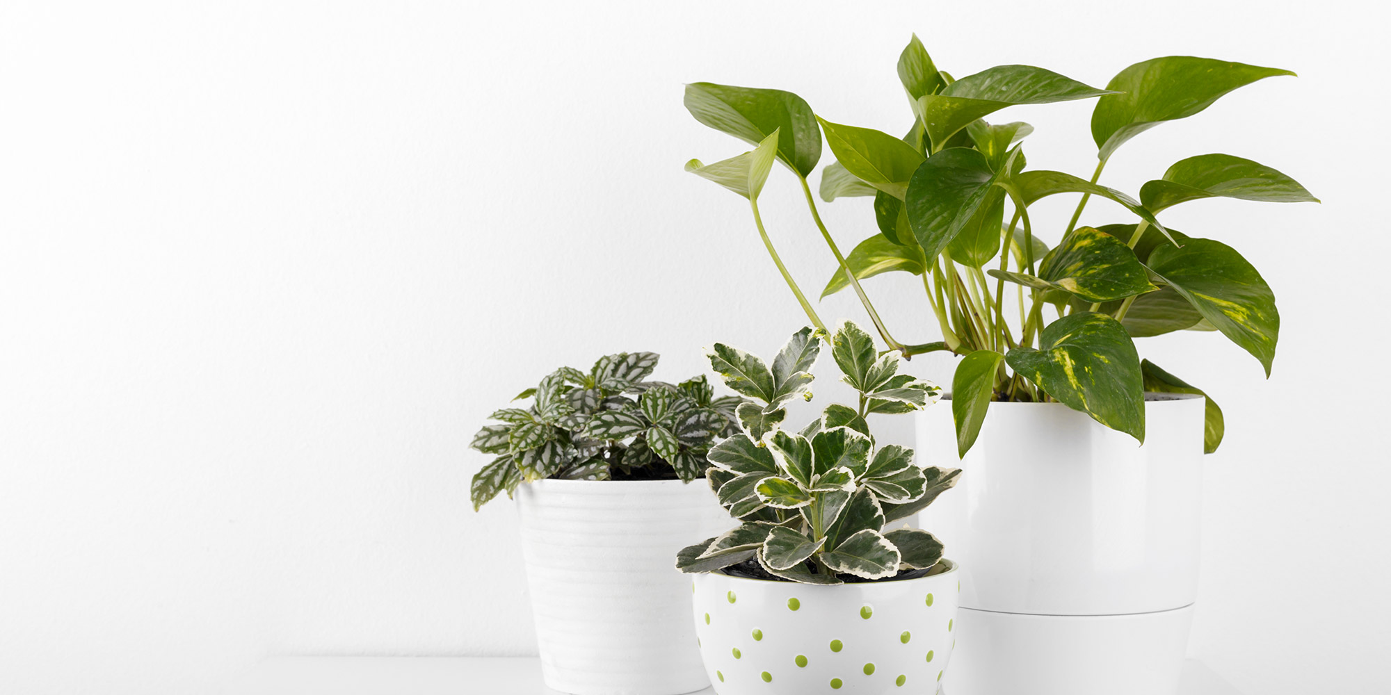 To take dust off live or artificial leaves, lightly dampen a microfiber cloth and wipe over the leaves. This will also add a bit of moisture to the real plants too.