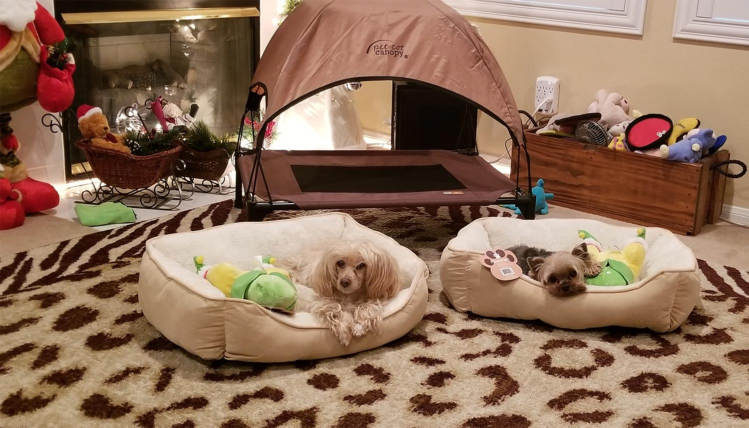 Pamela G. in Menifee, CA sent a picture of her two furry family members, Chipper and William, in their dog beds, each with a new toy from Santa Paws!