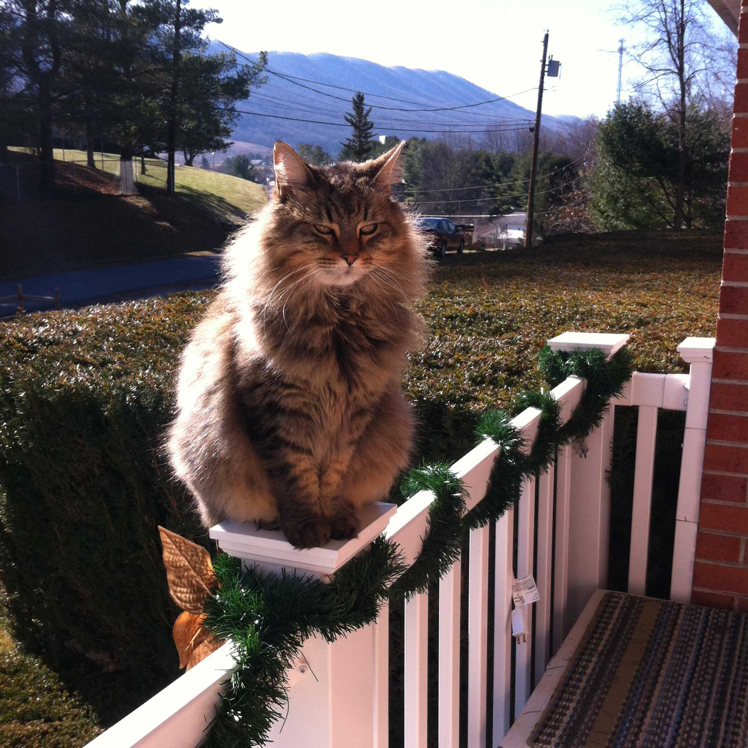 A reader sent a picture of her gorgeous, long-haired, green-eyed cat, Sophie, sitting on the front porch railing with beautiful, long white whiskers! Sophie's the welcoming committee, apparently!