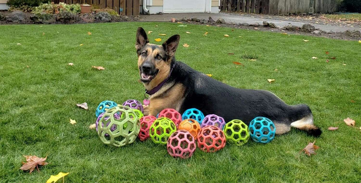 Linda M. sent a picture of her gorgeous, smiling German Shepherd, Lucy Belle, playing in the yard with some colorful balls.
