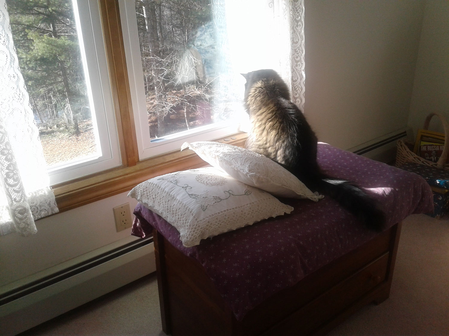 Meet Sam. Marianne M. sent pics of her handsome, grey, green-eyed cat Sam, hanging out on his favorite blanket chest, alternately napping and watching the squirrels and birds outside.