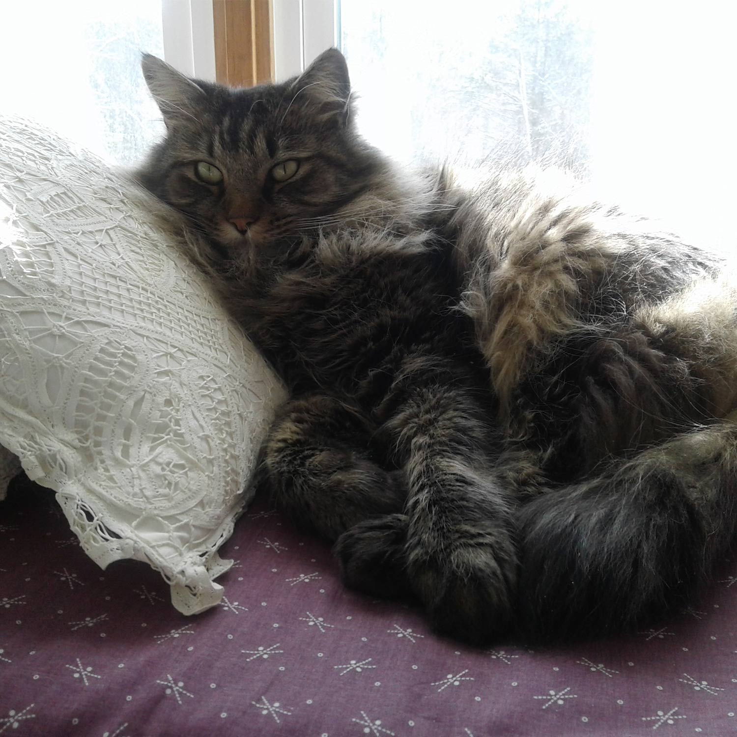 Meet Sam. Marianne M. sent pics of her handsome,grey, green-eyed cat Sam, hanging out on his favoriteblanket chest, alternately napping and watching thesquirrels and birds outside.