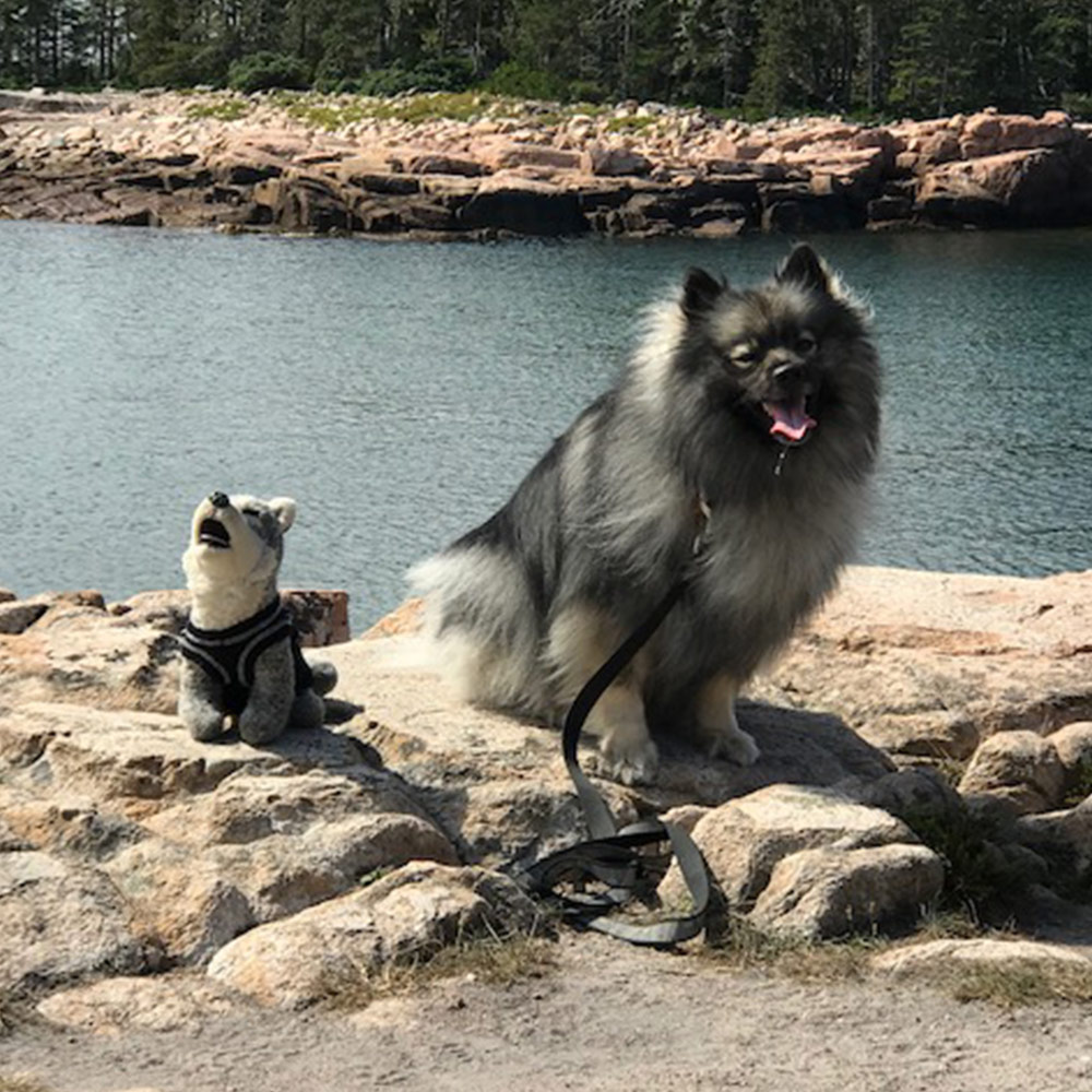 Meet Kody and Iroquois. Kody is a five-year-old lovable Keeshond. He loves hiking and loves his little buddy, the plush family mascot, Iroquois. Kody's mom Donna is out hiking with this pair, by a sparkling stream.