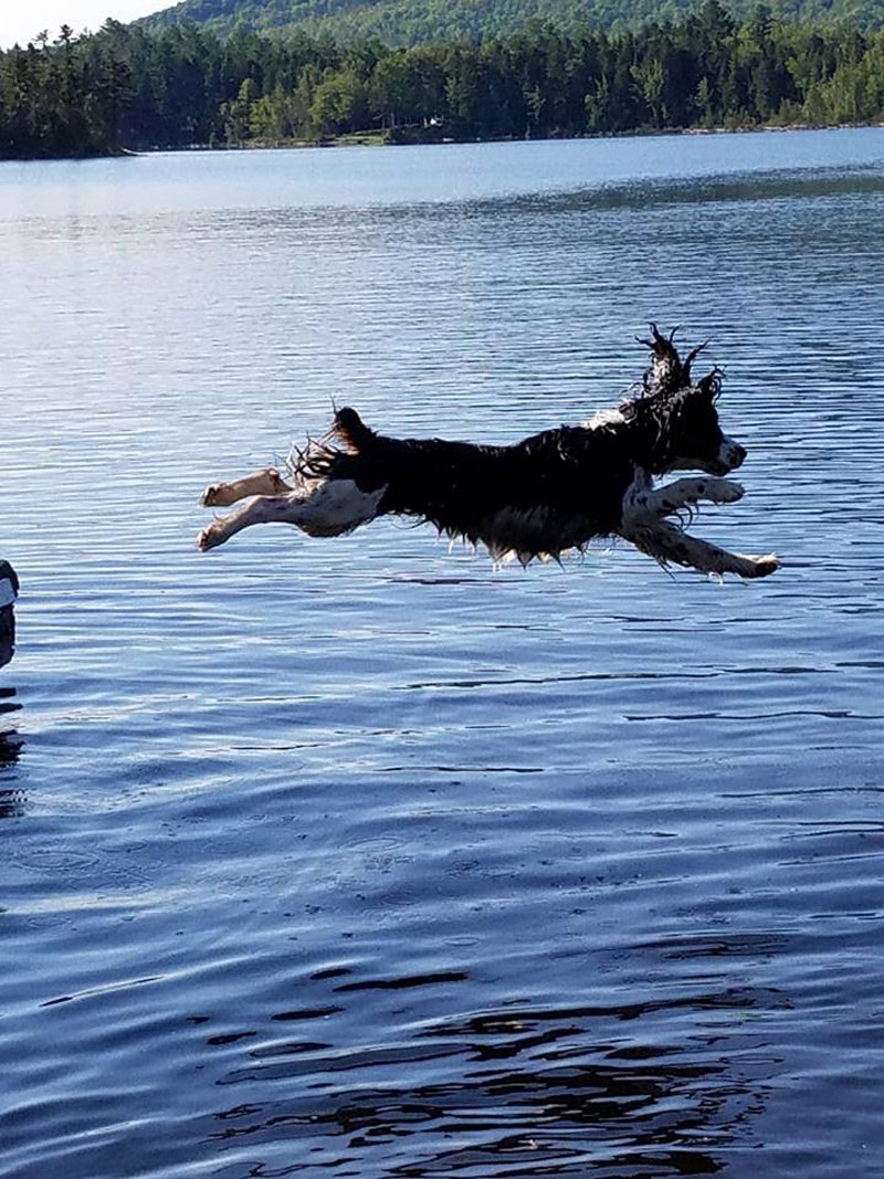 """Meet Lacy. She's getting her summer off to a great start, leaping and splashing into Lake Moxie in Maine. Lacy has some """"Moxie"""", doesn't she?"""