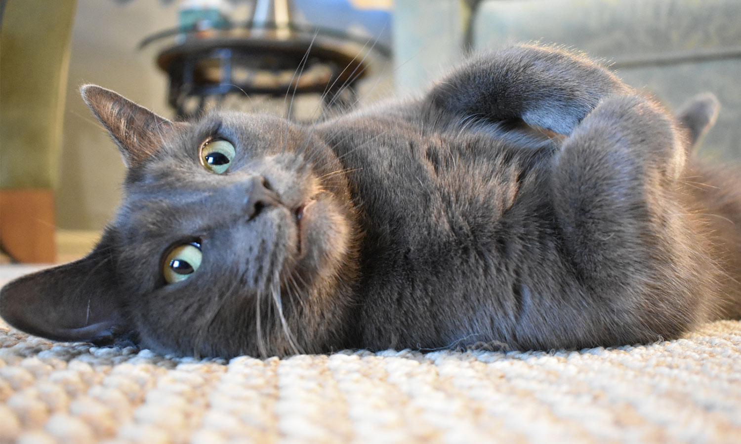 Leila sent a picture of her stunning grey and green-eyed cat, Stella, who is relaxing on the floor.