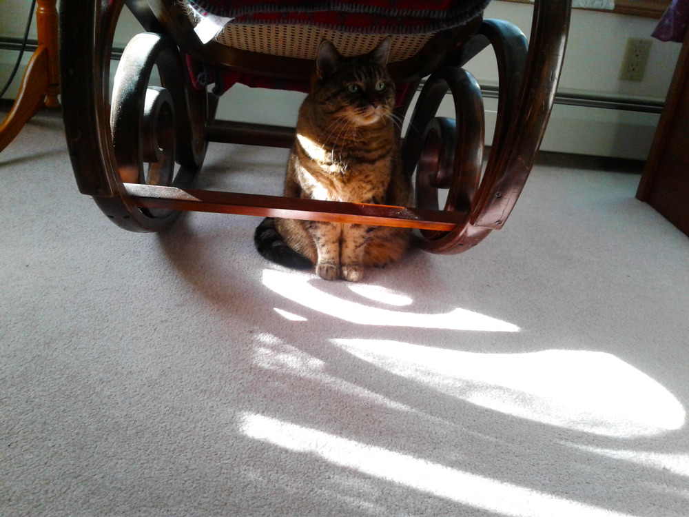 Marianne M. sent a picture of her gorgeous green-eyed tabby, Daisy May, catching some rays, under the family rocking chair!