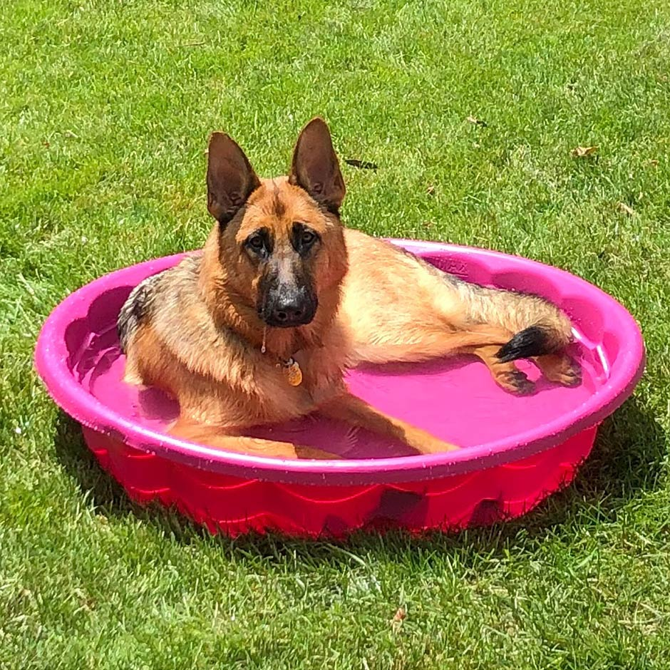 Meet Isabella. She is smart, gentle, loyal, and especially good looking, Mom Lynda C. can report. Isabella spent Memorial Day in the pool, in Dayton, OH at a family cookout!
