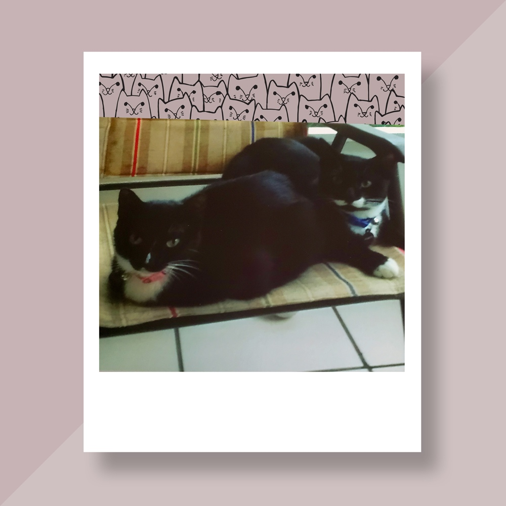 Kathleen B. in North Port, FL. sent a picture of her two bonded black cats, both with white feet, snuggling on the chair.