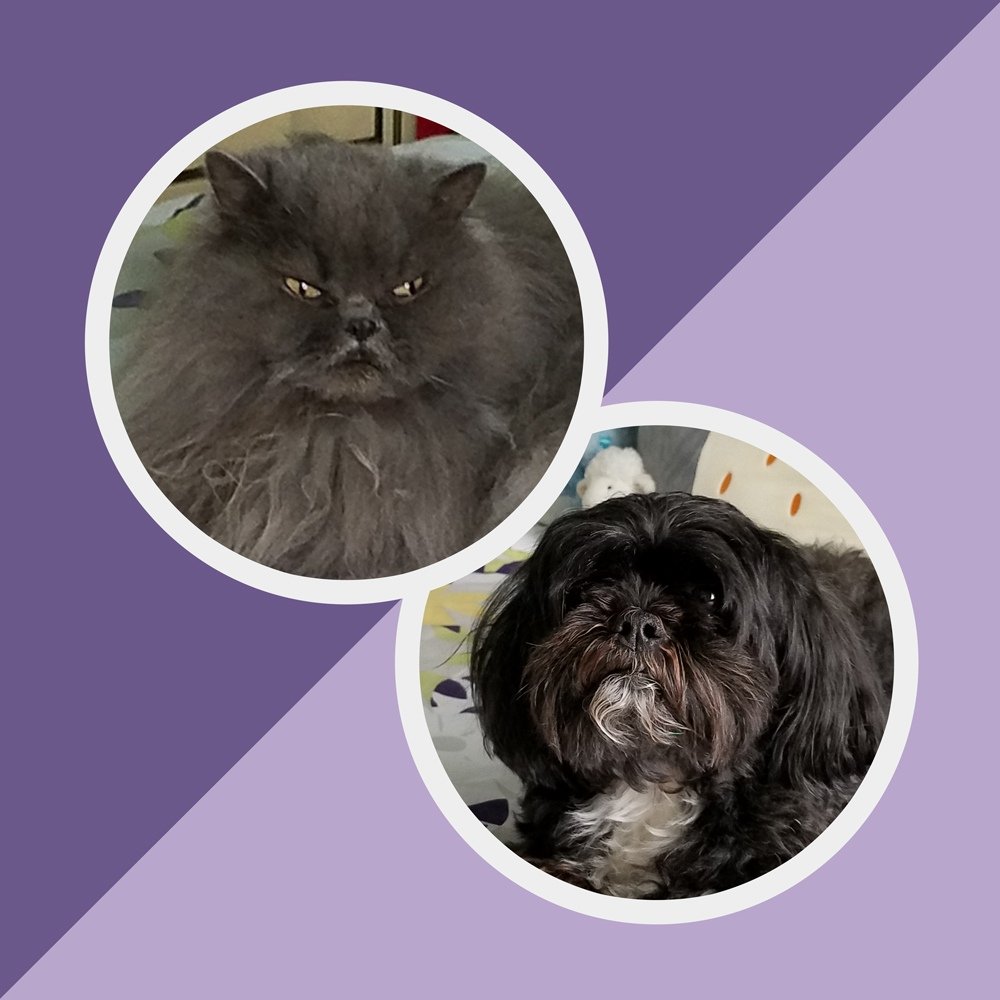 Meet Bleu Boy and Boots. Bleu is a Doll-Face Persian. He is 8 yrs old. Boots is a Maltipoo who is six. These two are the bright spots in owners Doug and Katrina B's lives.