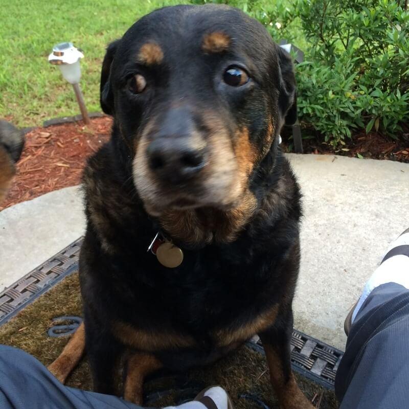 Peaceful Paws Pet Memorials