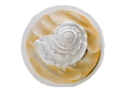 Oceanside shell white biodegradable urn for scattering ashes at sea.