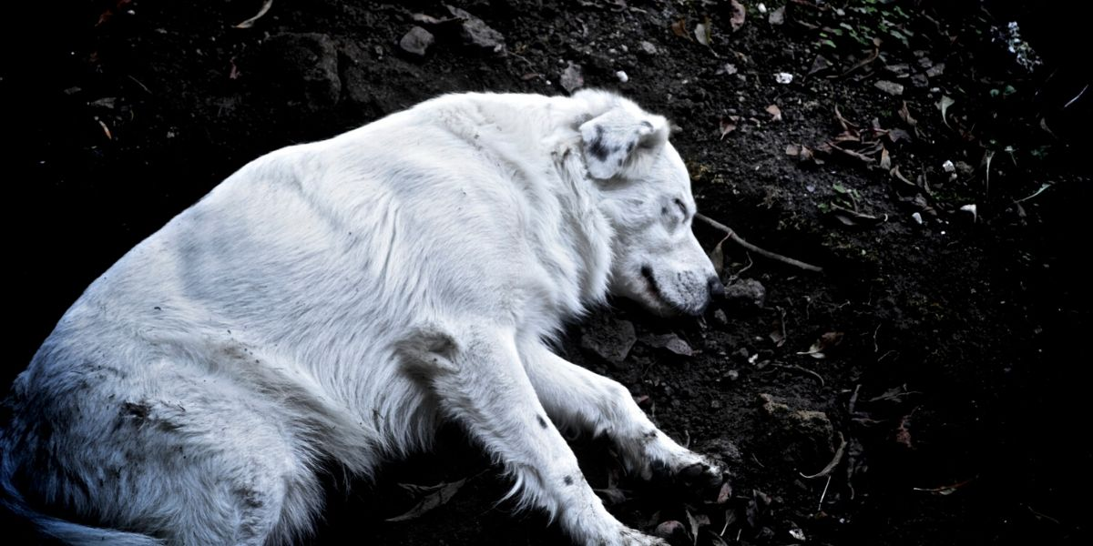 Where Do Dogs Go When They Die?