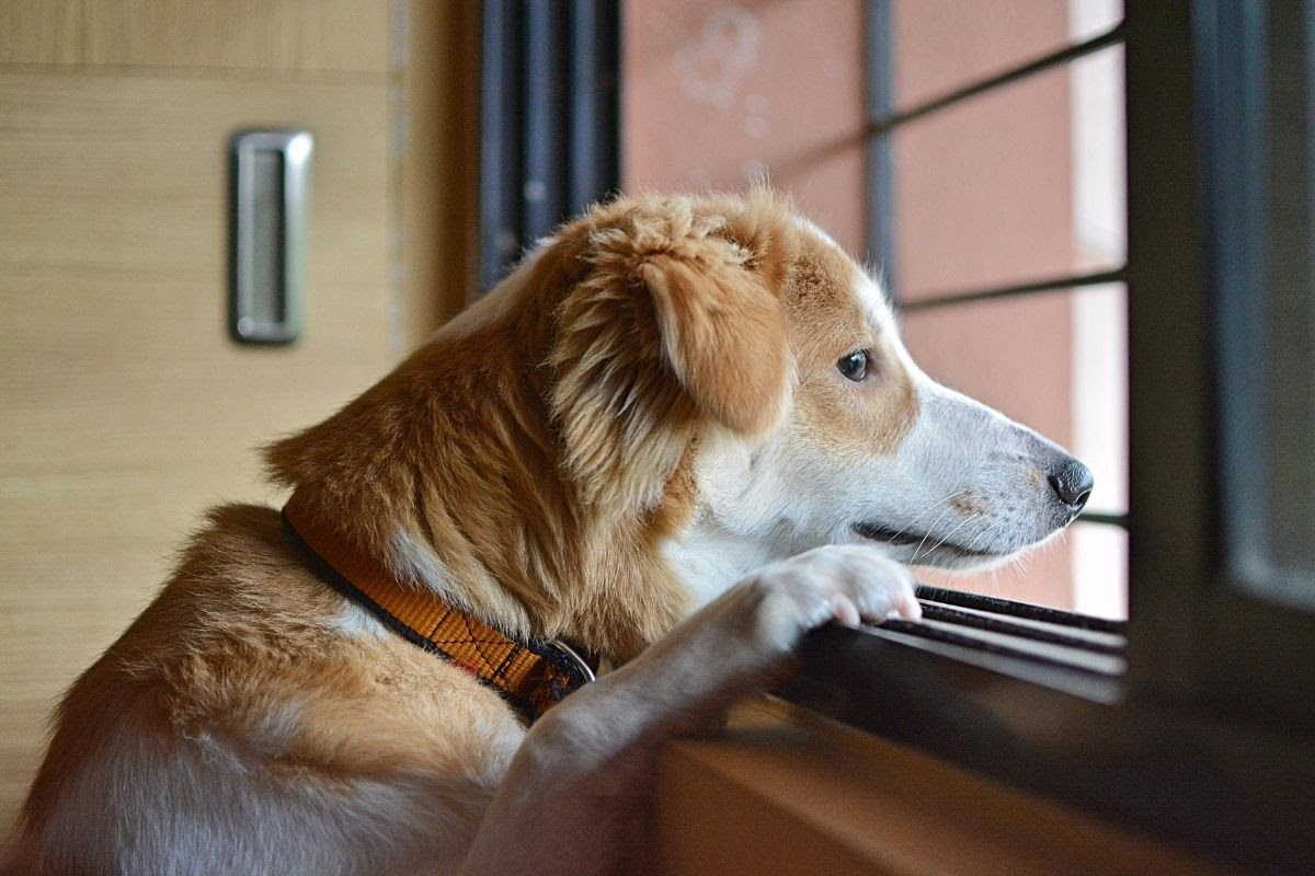 25 Comforting Poems For The Loss Of A Pet