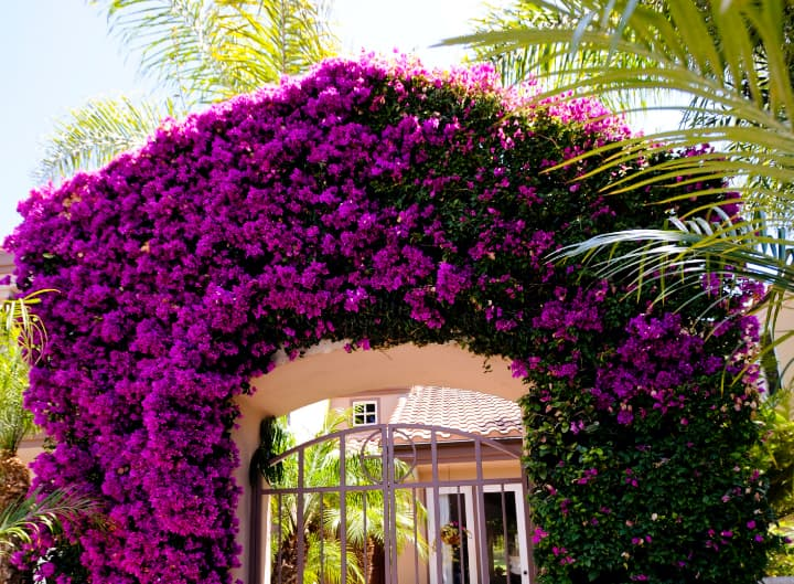 Flowers over gate