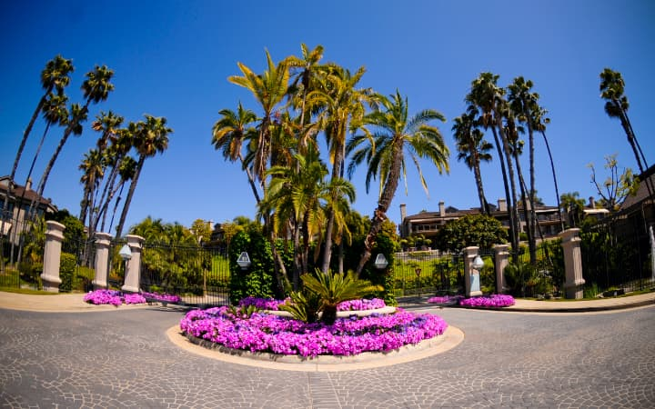Flowers and palm trees