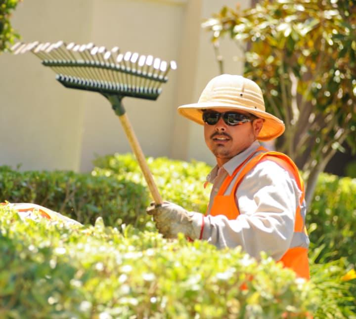 Landscaper with rake