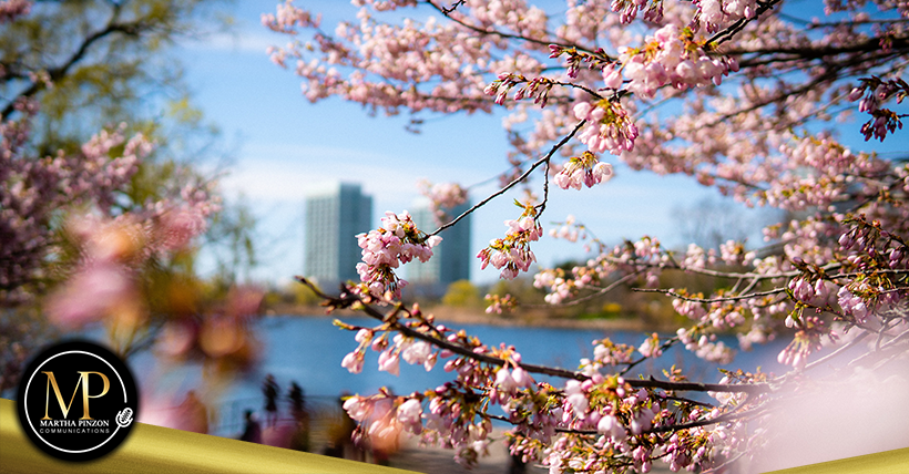 High Park en Toronto se mantendrá abierto durante la temporada de floración